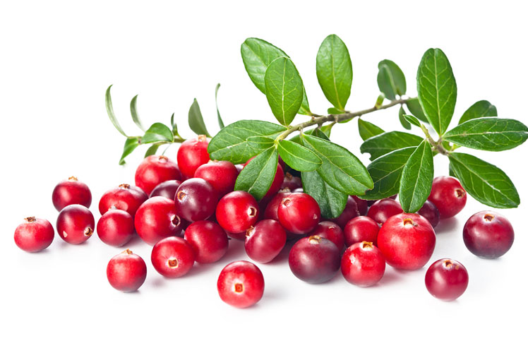Cranberry-Protein