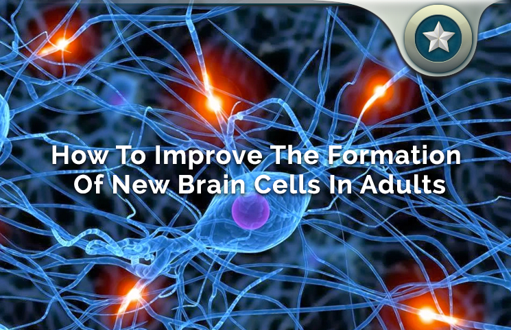 how to regenerate new brain cells for adults